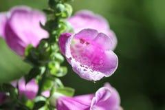 Plan rapproché intérieur de fleur Images stock