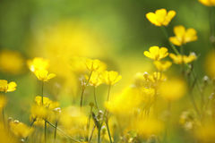 Plan rapproché jaune de fleur images libres de droits