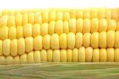 Plan rapproché jaune de maïs d'isolement sur le backgroud blanc Photos libres de droits