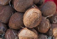 Plan rapproché mûr de noix de coco au soleil Photo libre de droits