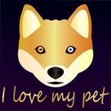 Plan rapproché mignon de Husky Dog - favori à la maison - idée pour une carte de voeux Photo stock