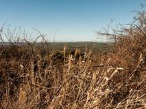 Plan rapproché mort d'herbe photo libre de droits