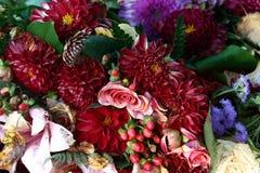 Plan rapproché mort de fleur Image libre de droits