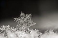 Plan rapproché naturel de flocon de neige Hiver, froid photo stock