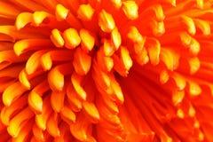 Plan rapproché orange de fleur Image libre de droits