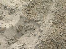 Plan rapproché pluvieux de sable Image stock