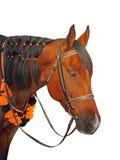 Plan rapproché pris de tête de cheval de Brown sur un fond blanc Image stock