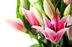 Plan rapproché rose de bouquet de lis image stock
