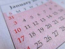 Plan rapproché rose de calendrier Images libres de droits