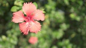 Plan rapproché rose de fleur Photo libre de droits