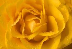 Plan rapproché rose de jaune avec des gouttelettes Photo stock