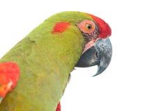 plan rapproché Rouge-affronté de tête de Macaw photos libres de droits