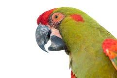 plan rapproché Rouge-affronté de tête de Macaw image stock