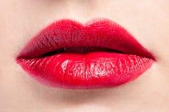 Plan rapproché rouge de languettes Photos libres de droits
