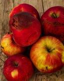 plan rapproché rouge de pommes d'automne Image libre de droits