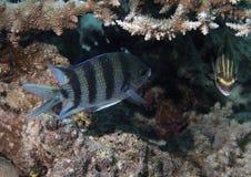 Plan rapproché sous-marin de poissons photos stock