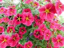Plan rapproché sur des fleurs photo libre de droits