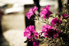 Plan rapproché sur la fleur rose avec le siluate Images stock