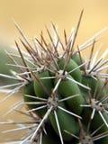Plan rapproché sur un cactus. La Californie. Photo libre de droits
