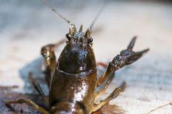 Plan rapproché sur un crabe Images stock