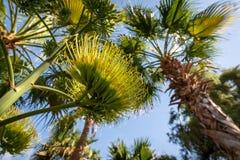 Plan rapproché sur une fleur d'agave vue de dessous, Abu Dhabi photos stock