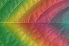 Plan rapproché teinté d'une feuille de gradient de couleur image libre de droits