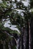 Plan rapproché tiré des feuilles congelées pendant l'hiver photographie stock
