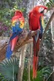 Plan rapproché tropical d'oiseau Image libre de droits