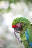 Plan rapproché tropical d'oiseau Images stock