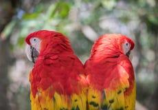 Plan rapproché tropical d'oiseau Images libres de droits