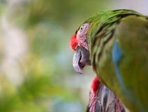 Plan rapproché tropical d'oiseau Photos stock