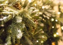 plan rapproché vert couvert de neige de branche de sapin, cartes de voeux de fête de décoration Image stock