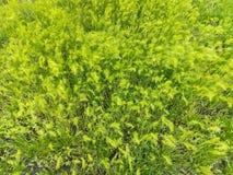 Plan rapproché vert d'herbe de ressort au soleil Photos stock