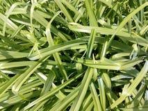 Plan rapproché vert d'herbe de ressort au soleil Photo libre de droits