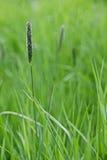 Plan rapproché vert frais d'herbe de ressort en tant que fond abstrait de nature Image stock