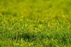 Plan rapproché vibrant d'herbe verte images stock
