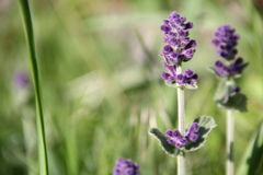Plan rapproché violet de fleur Photo stock