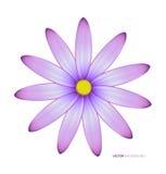 Plan rapproché violet de fleur Photographie stock libre de droits