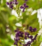 Plan rapproch? avec l'orchid?e rose et fond un jour pluvieux photos stock