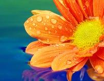 Plan rapproché d'une fleur orange Photos stock