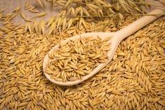 Plan rapproché de grain d'avoine Image libre de droits