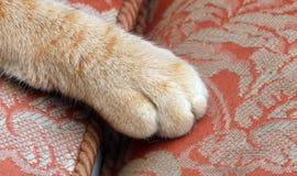 Plan rapproché de patte de chats Images stock