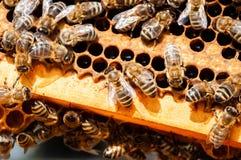 Plan rapproch? des abeilles sur le nid d'abeilles dans la ruche, rucher, foyer s?lectif photographie stock libre de droits