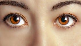 Plan rapproché femelle de regard fixe d'oeil de yeux de Brown de femme Images stock