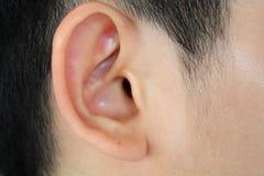 Plan rapproché humain d'oreille Photo stock