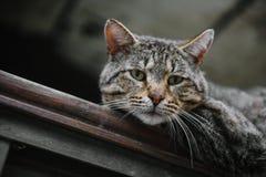 Plan rapproch? sans abri de chat regardant la cam?ra images libres de droits