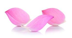 Plan rapproché sur le pétale de lotus sur le fond blanc Photos libres de droits