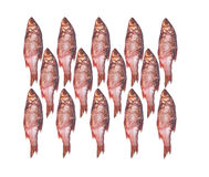 A plan of red fish Stock Photos
