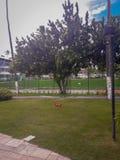 Plan semesterort på Porto de Galinhas, Pernambuco, Brasilien royaltyfri fotografi