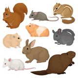 Plan vektoruppsättning av olika gnagare Små skog och tamdjur Däggdjurs- varelser Fauna- och djurlivtema royaltyfri illustrationer